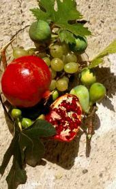 Vitis vinifera. Grape and other summer fruits. Vitaceae