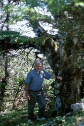 Cedar of Lebanon. Near Slenfeh, Syria. May 2000