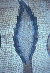 Cupressus sempervirens Cypress. Mosaic, Medaba. Cupressaceae