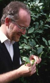 Laurus nobilis. Being examined by noted author, Henk Medema. Lauraceae