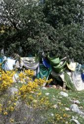 Pistacia atlantica. Tree honoring dead. Near Kufur Yusef, Galilee. Anacardiaceae