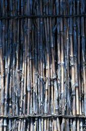 Arundo donax. Wall made from culms. Fuheis, Jordan. Poaceae