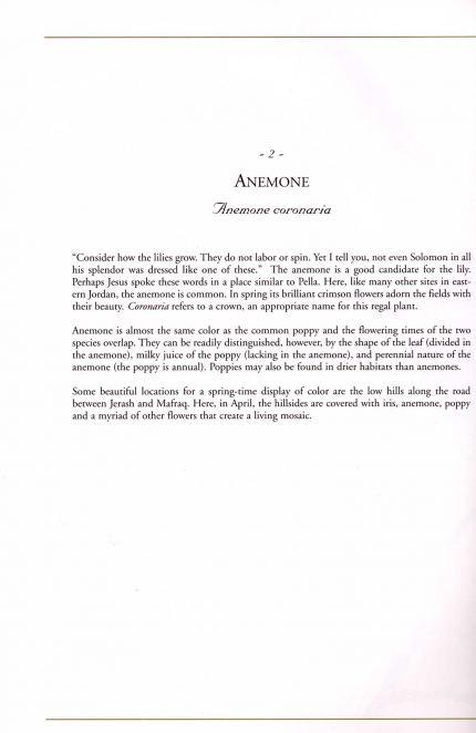 Anemone coronaria text